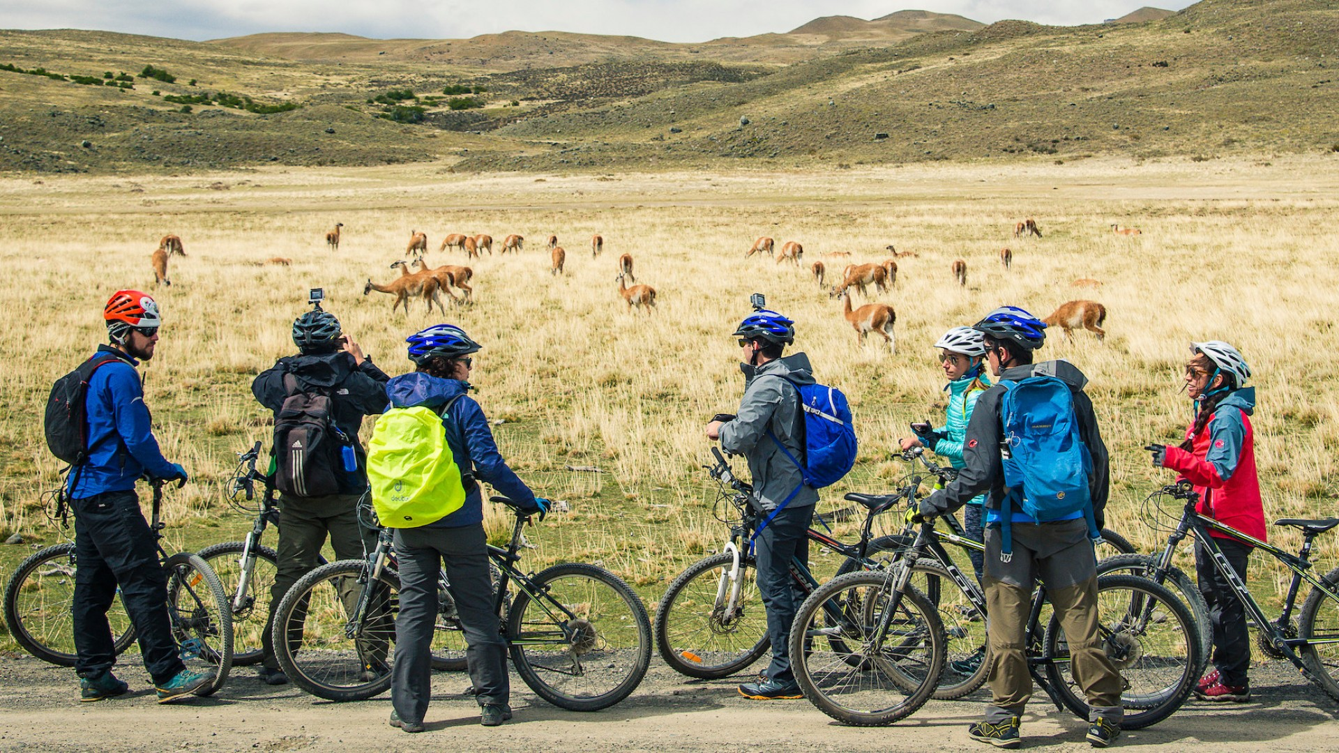 bikers looking at wildlife in patagonia