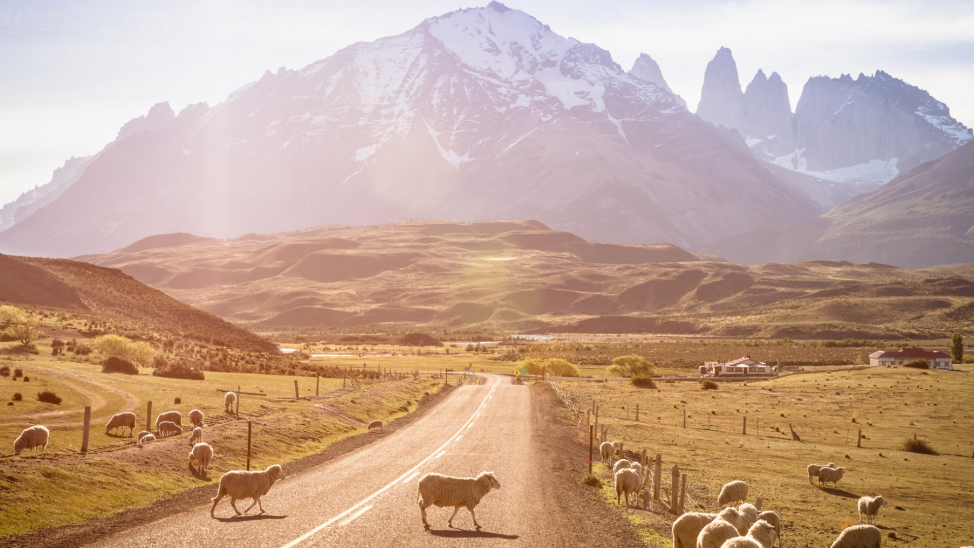 patagonia countryside with grazing sheep