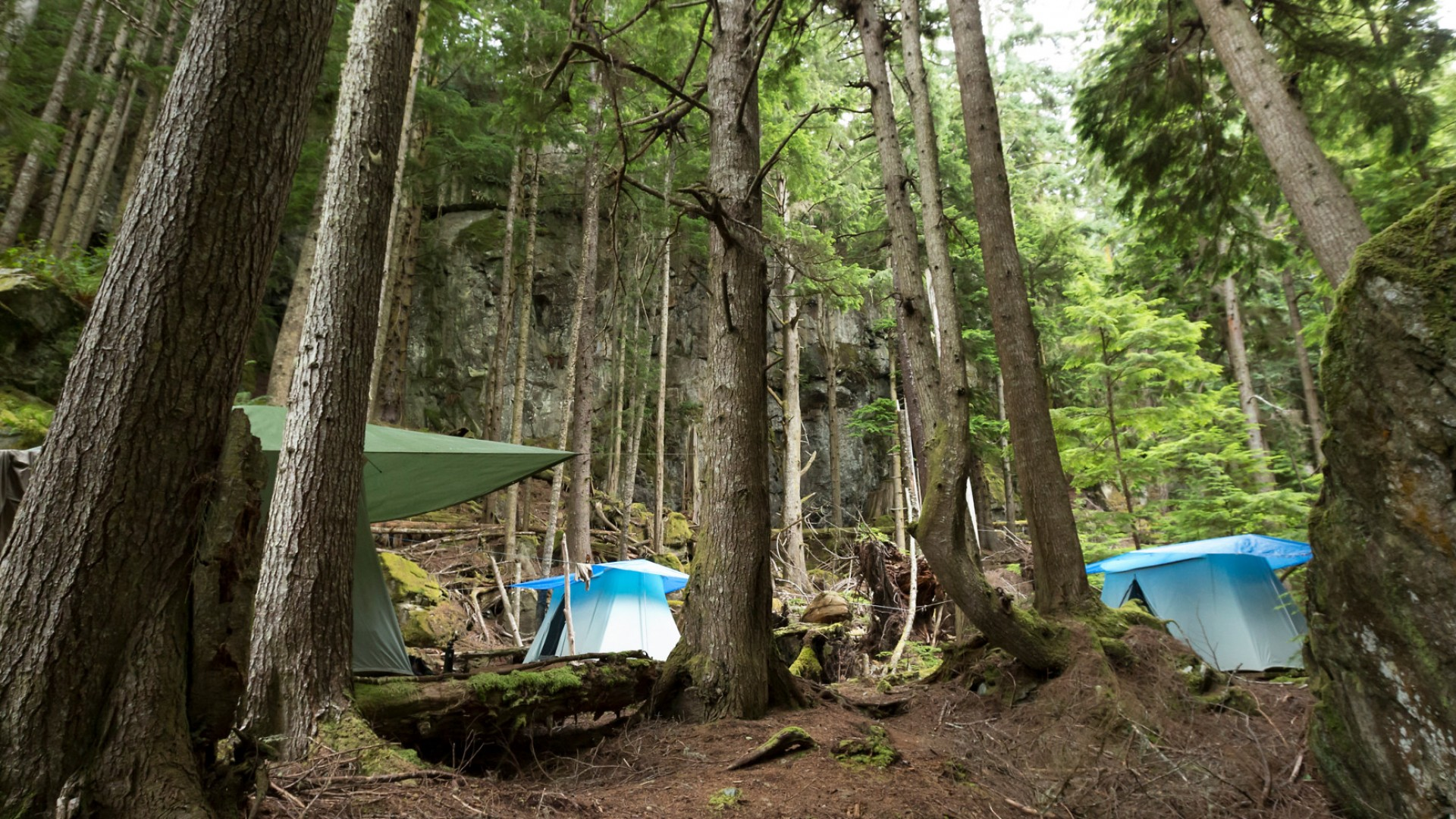 base camp tents in woods in canada