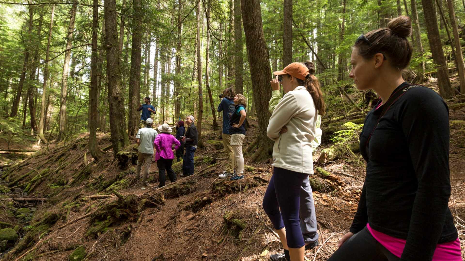 hikers in bc rainforest