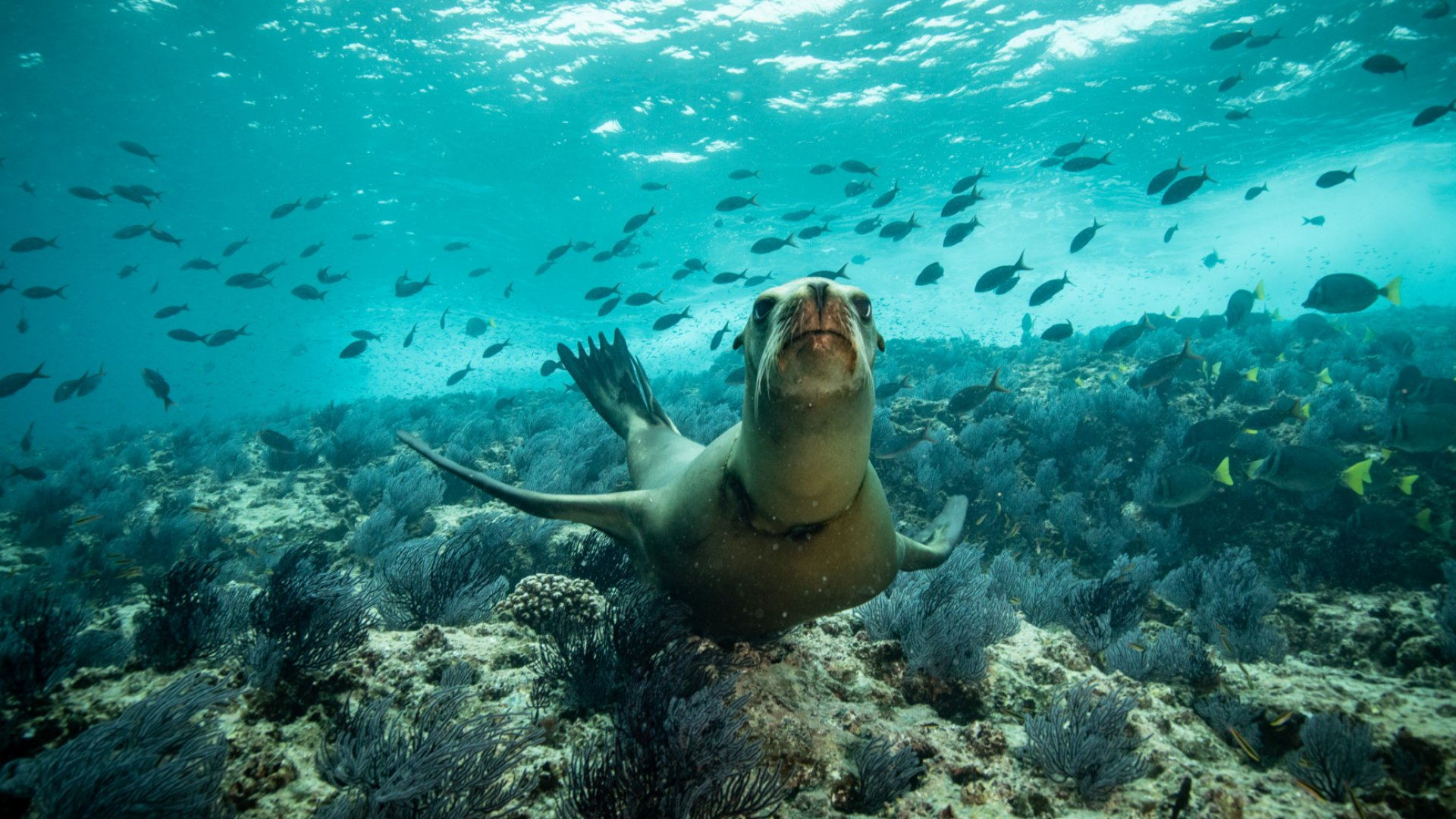 california sea lion in baja
