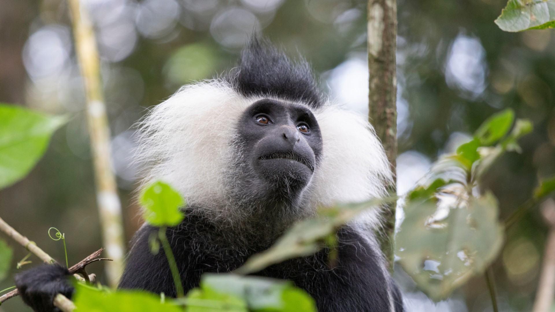 monkey tours or treks in Rwanda