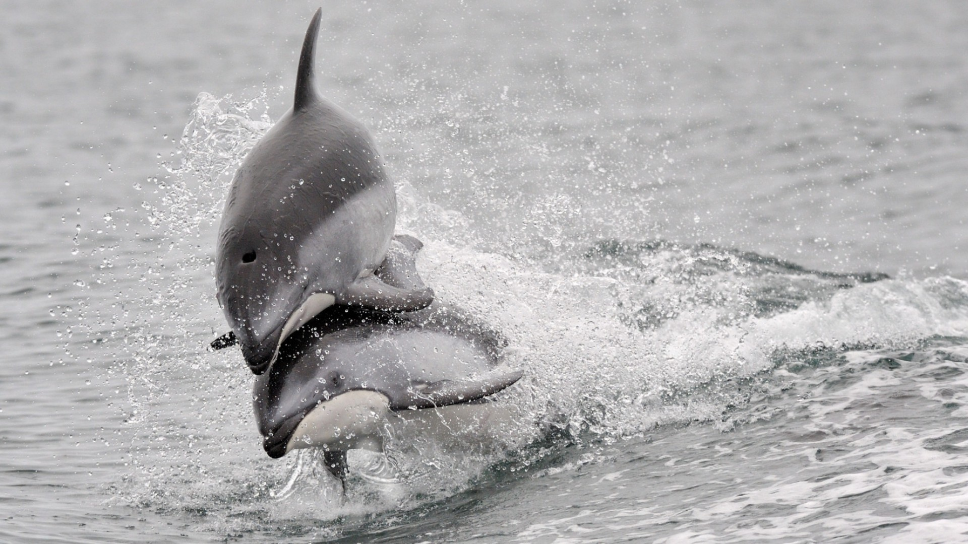 dolphins in British Columbia