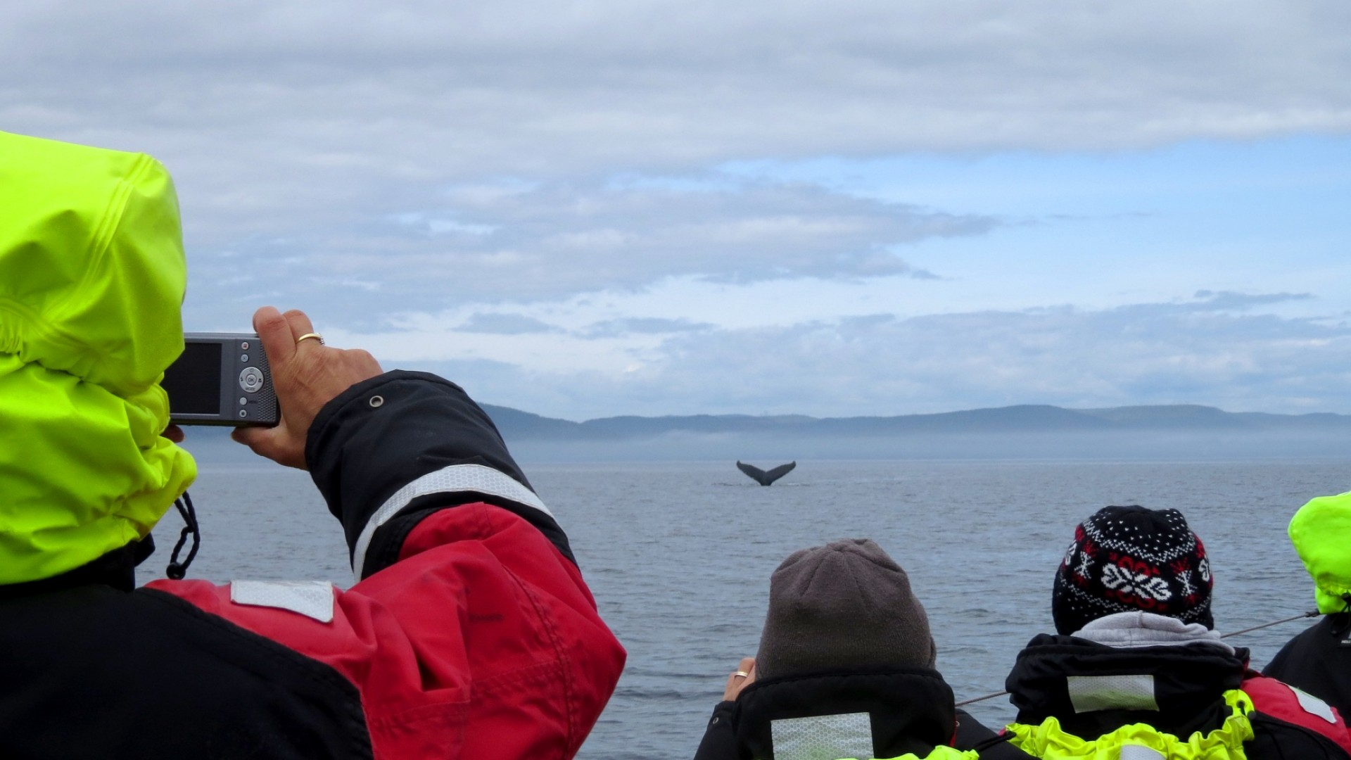 people whale watching in quebec canada
