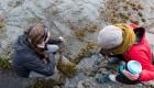 intertidal zone johnstone strait, BC