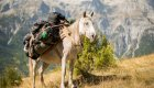 horse with packs in albania