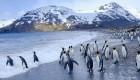 cruise tours in antarctica