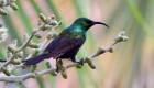 Rwanda wildlife tours