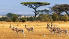 private safari south africa