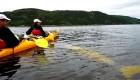 beluga under sea kayak