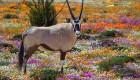 custom safaris in south africa