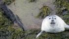 white seal sitting on rocks