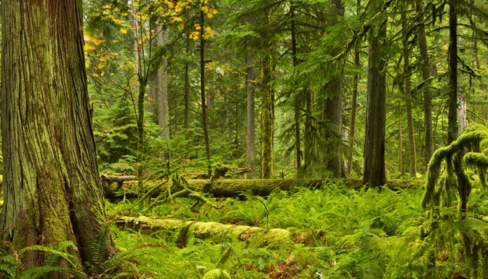 Conservation in British Columbia