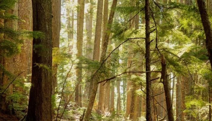 Flora of British Columbia