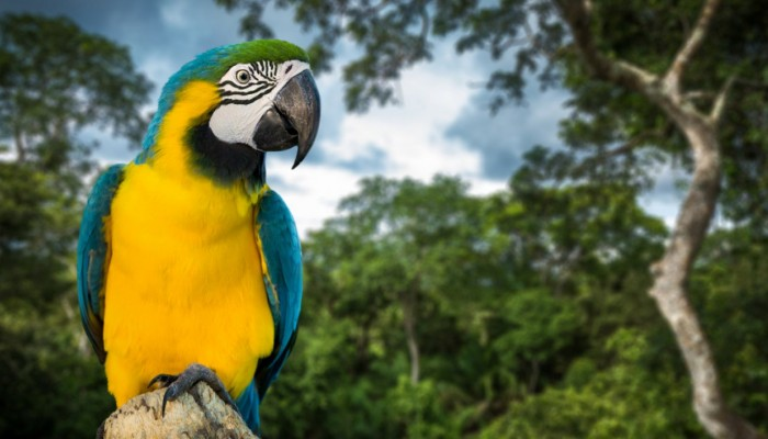 Conservation in Costa Rica