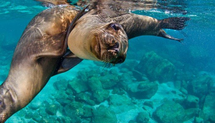 Wildlife in Baja