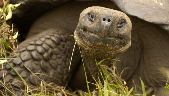 Conservation in Ecuador & Galápagos