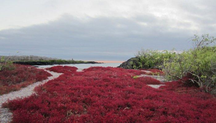 Flora of Ecuador & Galápagos