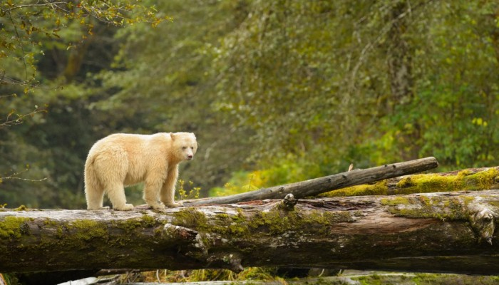 Animals of British Columbia