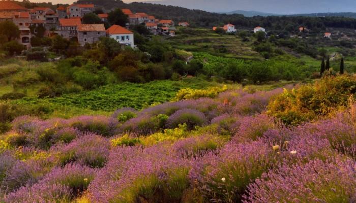 Flora of Croatia