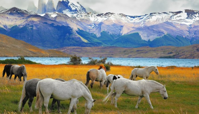 Conservation in Patagonia