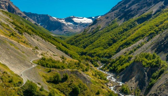 Flora of Patagonia