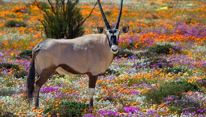 Flora of South Africa